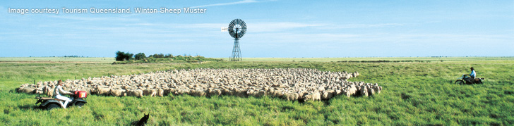 Winton Sheep Muster