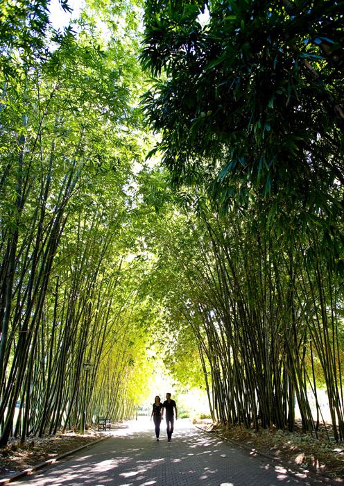 Brisbane Botanic Gardens - Image Tour