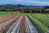 Stanthorpe Orchards