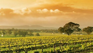 Queensland Wine thumbnail